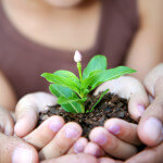 3 Essential Herbs to Plant As A Family