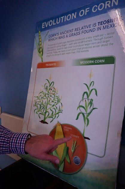 Corn Plant Then and Now